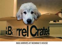 max_in_crate_and_barrel_box.jpg