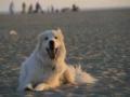 Max_at_beach1_-2.jpg